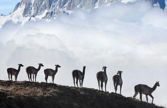 Patagonien Trekking: Granit und Eis