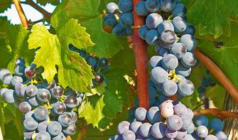 Kostbarkeiten der Rioja