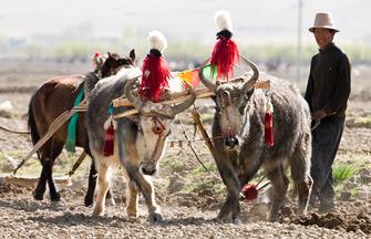 Heiliger Weg nach Tibet