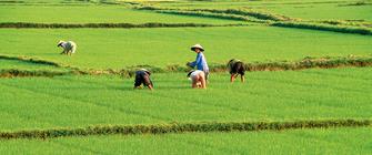 Vietnam auf einen Blick