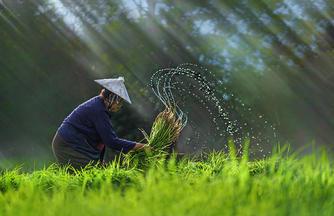 Geschmackvolles Vietnam