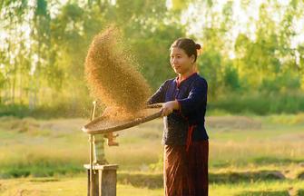 Thailand-Heute schon Reis gegessen?