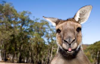 Australische Impressionen
