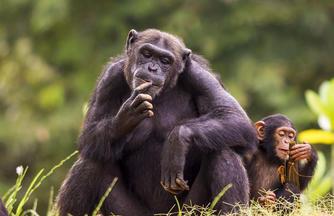 Im Land der Berggorillas