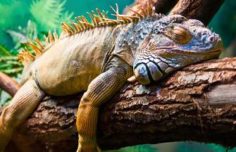 Galápagos auf die bequeme Art