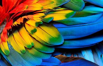 Posada Amazonas ─ Erlebnis Regenwald