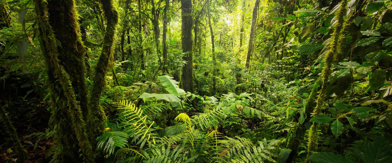Costa Rica ─ Vogelgezwitscher und Kaffeeduft
