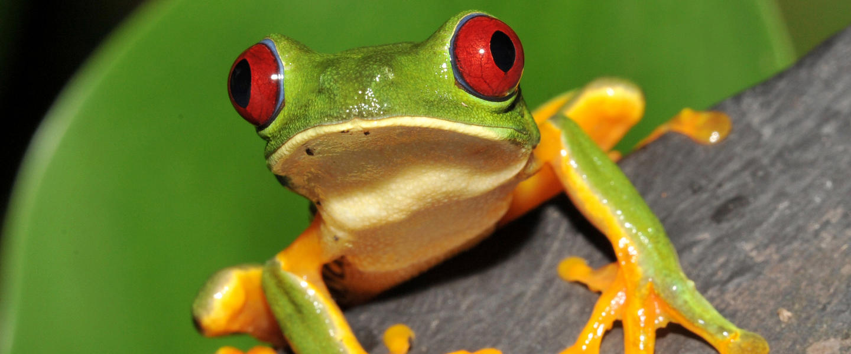Costa Rica ─ das grüne Paradies