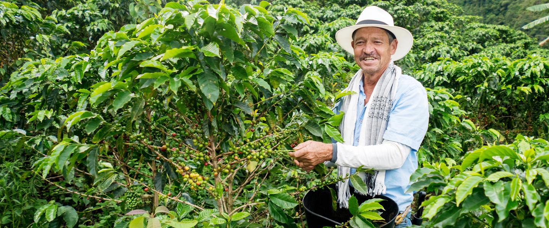 Kaffeeduft und Karibikzauber