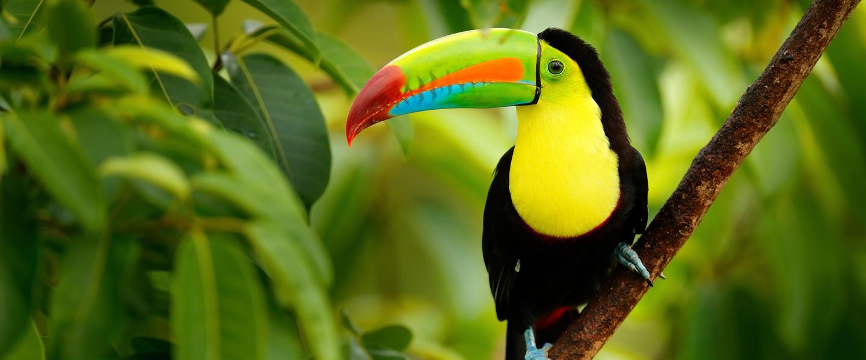 Nicaragua ─ im Herzen Mittelamerikas
