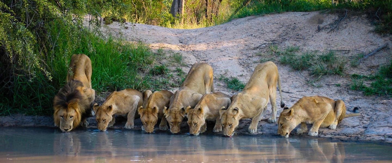 Faszination südliches Afrika