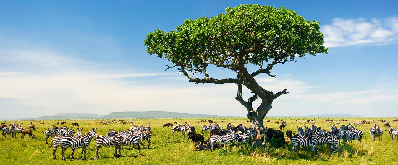 Höhepunkte Tansanias