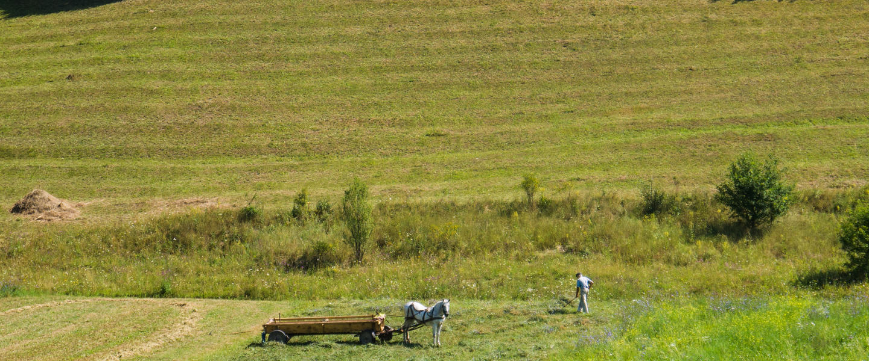 Landwirtschaftliche Reise: Rumänien
