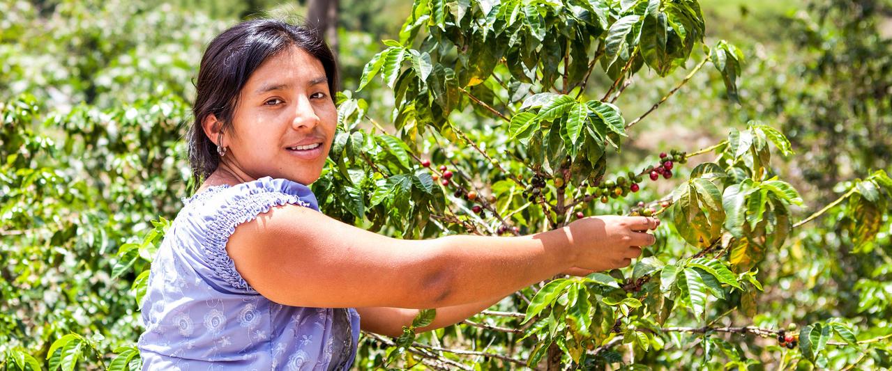 Kulinarische Erlebnisse in Costa Rica