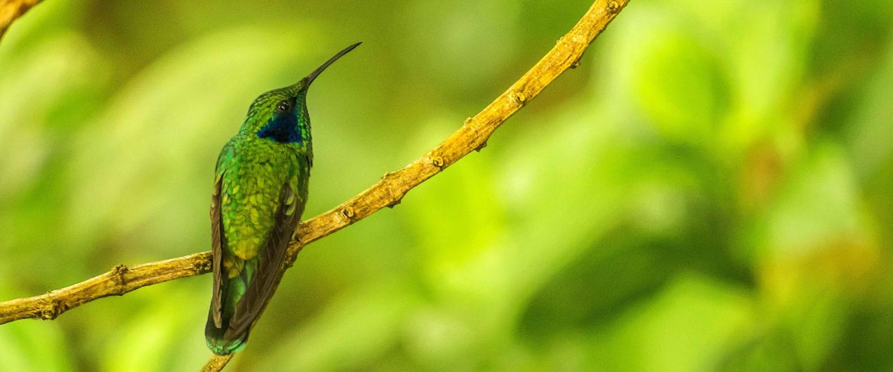 Costa Ricas Naturwunder mit Stil entdecken