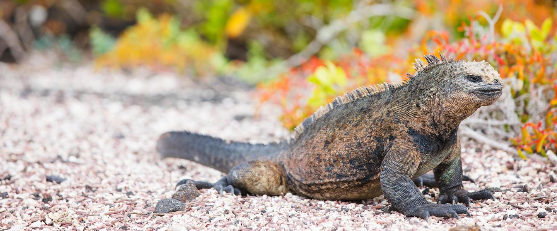 Ecuador und Galápagos ─ ein Land voller Wunder