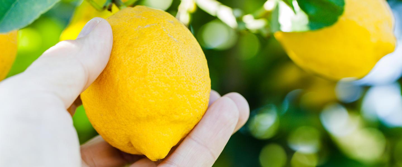 Ostsizilien ─ das Land, wo die Zitronen blühen