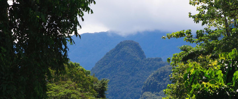 Naturparadies Borneo