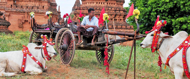 Myanmar ─ Mittendrin statt nur dabei