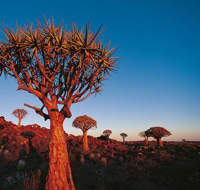 Von den Viktoria-Fällen in die Kalahari-Wüste