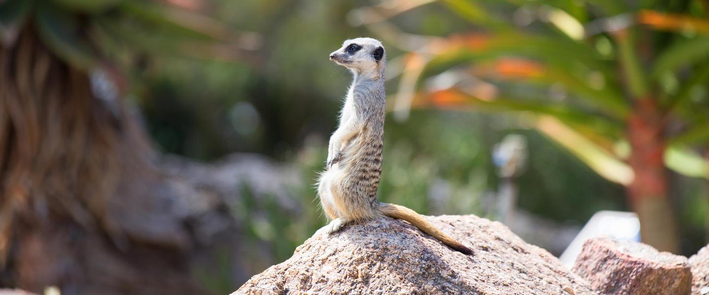 Namibias Vielfalt entdecken für Einsteiger