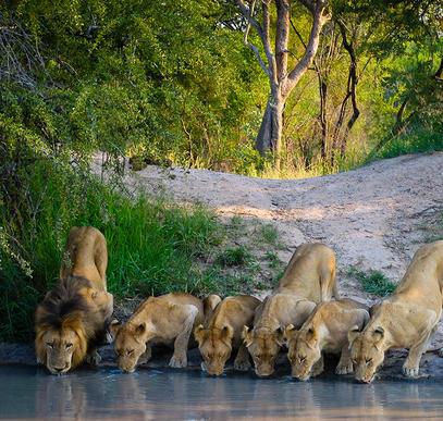 Südafrika ─ Vom Krügerpark bis zur Gartenroute