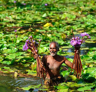 Der Zauber Sri Lankas