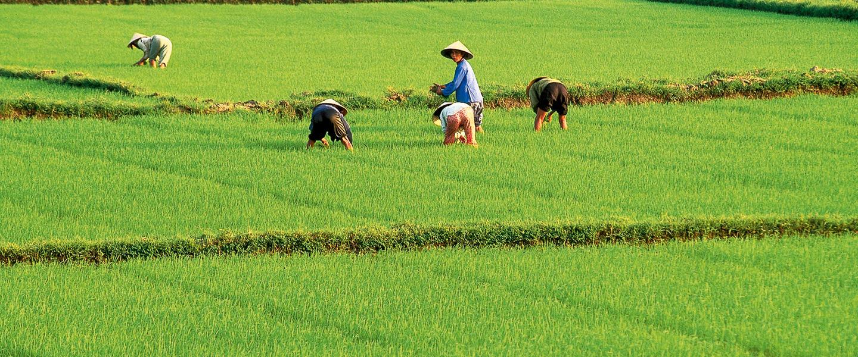 Vietnam zum Kennenlernen