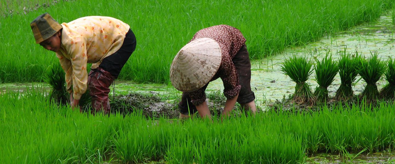 Auf Entdeckungsreise von China nach Vietnam