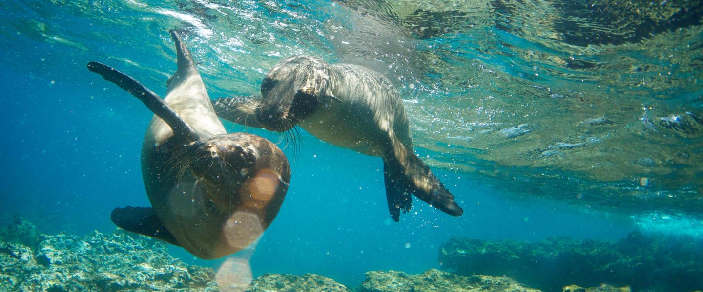 Galápagos ─ Arche Noah im Pazifik