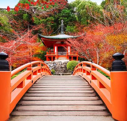 Höhepunkte Japans privat erleben