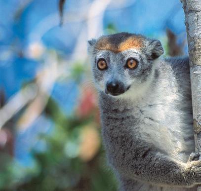 Privatreise Madagaskar