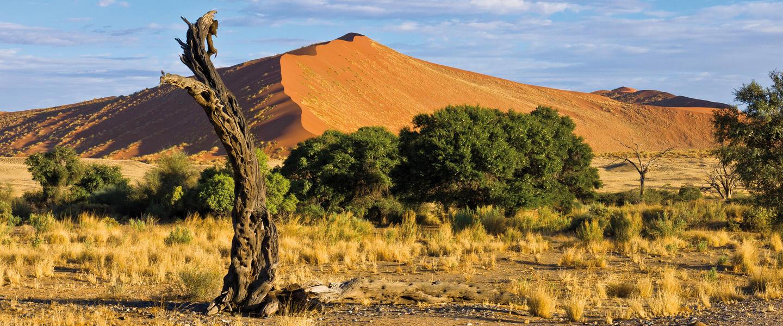Einzigartiges Namibia