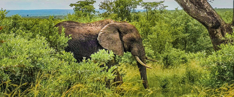 Südafrika ─ Faszination Wildnis privat