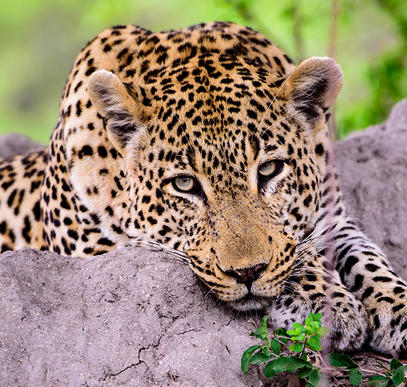 Südafrika ─ Faszination Wildnis