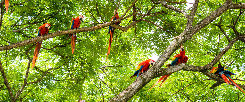 Refugio Amazonas ─ Erlebnis Regenwald