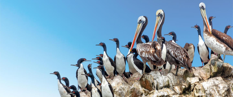 Palomino Inseln