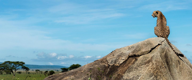 Tansania ─ auf der Pirsch am Kilimanjaro