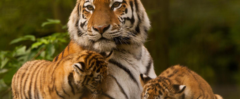 Taj Mahal und Tigerpirsch privat
