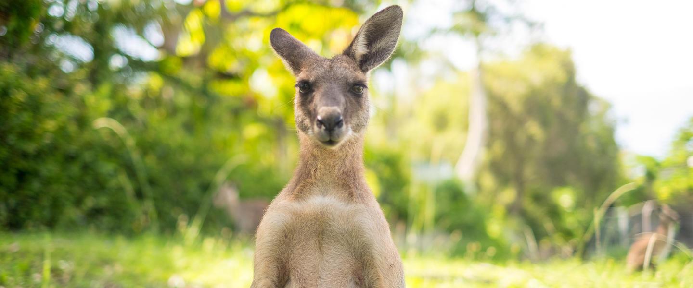 G´Day Australia